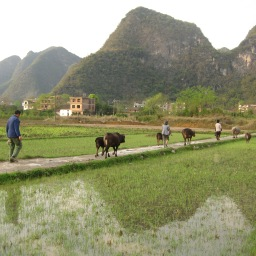 The Chinese Government Should Support Small Scale Agriculture for a Green China