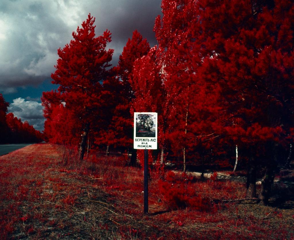 Резултат слика за chernobyl red forest