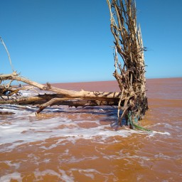 Mine tailings and enviromental (dis)controls in a Brazilian coastal area